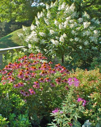 gardenpic 5